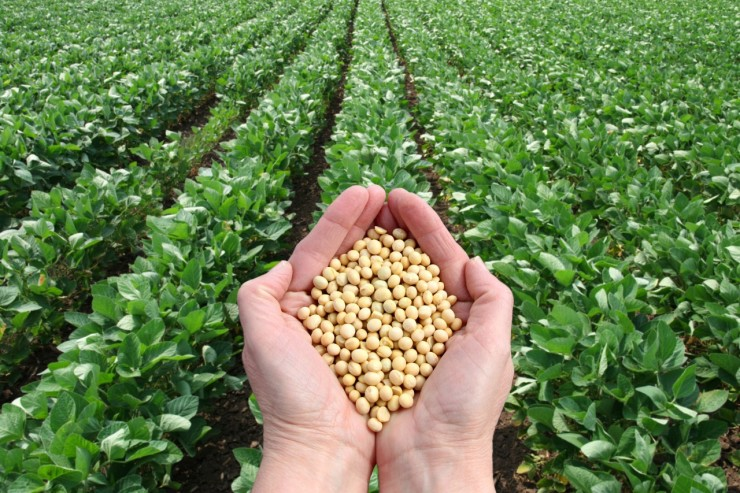 Sojabønner korrigerer nedad i pris efter sidste uges markante hop. Den svage soja presser øvrige afgrødepriser.