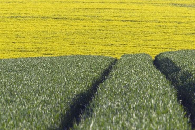 Der er lidt styrke til afgrødepriserne onsdag selvom vejret arter sig fordelagtigt i Europa.