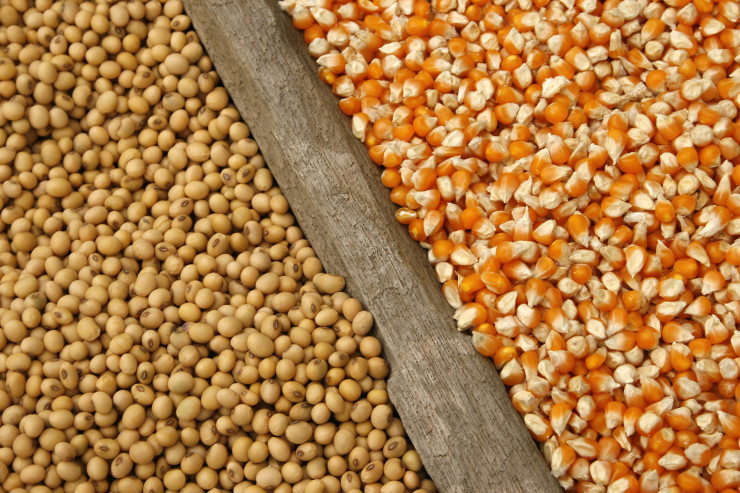 Majs og sojahøsten holder afgrødepriserne under pres trods stor efterspørgsel på verdensmarkedet.