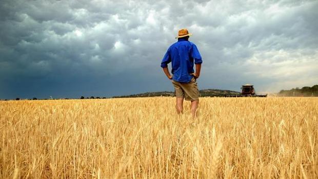 Hvedeprisen styrkes på grund af dårligt høstvejr i Australien.